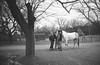 Dodge Horse (John's Vintage Cameras) Tags: exakta ihagee vintage slr film analog madeingermany 35mm fomapan foma steinheil 40mm