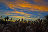 Bonfire of the Vanities (oybay©) Tags: arizona sunset winter sky cloud outdoor dusk serene field landscape bright skyline tree grass sun city west colorful color tonight monsoon weather clouds summer fall silhouette colros sunshower shower backyard nikon cactus hardtosee bombcyclone