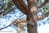 #pájaro #bird #ave #fowl #árbol #tree #2016 #doñana #huelva #andalucía #españa #spain #animal #naturaleza #nature #viajar #travel #viaje #trip #aventuras #adventures #paisaje #landscape #photography #photographer #picoftheday #canonistas #canonimagen #Can (Manuela Aguadero PHOTOGRAPHY) Tags: trip landscape canoneos7d españa canonistas 2016 adventures andalucía animal pájaro nature fowl viajar spain aventuras canonimagen doñana picoftheday manuelaaguadero canonforum photography bird ave tree paisaje huelva photographer canon7d árbol naturaleza travel viaje