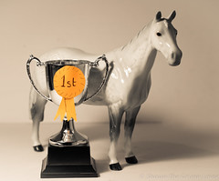 thinking of a song 02 dec 17 (Shaun the grime lover) Tags: animal horse race winner cup trophy