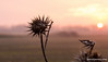 beauty of nature (isoVlog) Tags: nature doğa sunset gün kızıl red gökyüzü sky sun güneş çiçek flower günbatımı turkey trakya lüleburgaz akşam