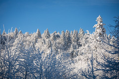 First snow (Cortez_CRO) Tags: modruš karlovačkažupanija croatia hr modrus hrvatska kapela 2017 autumn winter snow snowy tree trees cold ngc