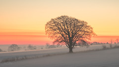 Good Morning (JamesPicture) Tags: home staffordshire stoke tree redsky sunrise snow landscape