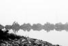 Una bella discussione (paolotrapella) Tags: natura water acqua laguna uccelli animali portolevante