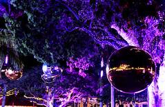 Nouméa Féerie 2017 (cedric.harbulot) Tags: nikon d5300 18250mm sigma nouméa féerie nouvellecalédonie nuit noël boule lumière fête arbre night light newcaledonia tree party féérie