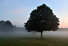 Mist and the morning  -  (Selected by GETTY IMAGES) (DESPITE STRAIGHT LINES) Tags: nikon d7200 nikond7200 nikkor1024mm nikon1024mm getty gettyimages gettyimagesesp despitestraightlinesatgettyimages paulwilliams paulwilliamsatgettyimages tree trees wood woods woodlands footscraymeadows kent bexley england uk tranquil tranquility serene serenity calm peace peaceful morning am firstlight light sunlight thegoldenhour goldenhour magichour themagichour mist misty morningmist mistysunrise forest silhouette sunrise sun ethereal