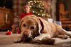 Christmas2017-3 (teamribcage) Tags: christmas holiday family canon 5dii 5dmarkii 35l ef35mmf14lusm ef35f14l presents pocketwizard tt1tt5 flextt5 minitt1 430exii