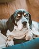 (HelloI'mJulia.) Tags: fujixt2 fuji fujifeed fujifilmxt2 fujifilm 35mmf14 35mm dog dogclothes dogs petportrait pet