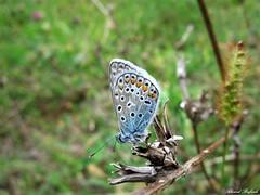 Butterfly 1539 (+1000000 views!) Tags: butterfly borboleta farfalla mariposa papillon schmetterling فراشة