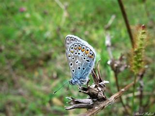 Butterfly 1539