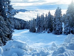 View from Mt Seymour (SqueakyMarmot) Tags: vancouver suburb northvancouver mtseymour winter snow fog nature clouds forest trees