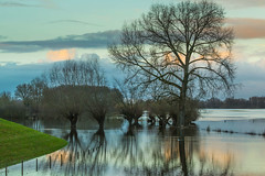 Lucky us having dikes.. ;) (fredvr (Fred van Rooijen)) Tags: ijssel bomen boom eik hoogwater nature natuur tree trees wilg willow