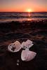 20170726-Canon EOS 750D-7339 (Bartek Rozanski) Tags: hvammstangi nordvesturkjordaemi iceland beach black shell crab broken sunset midfjordur sand