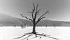 Dead trees, Namibia (reinaroundtheglobe) Tags: namibia deadvlei africa deadtree heath desert nopeople landscape nature beautyinnature blackandwhite bnw bw