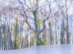 361/365 (Jane Simmonds) Tags: forestofdean meadowcliffpond snow winter reflections ice trees 361365 3652017