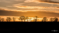 Tree line sunset (Michał Banach) Tags: canon5dmarkiv greaterpoland napachanie clouds countryside dramatic field fields outddor outside sun sunset tree trees wielkopolskie poland pl canonef24105mmf4lisiiusm