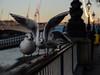 Queue jumping (PChamaeleoMH) Tags: birds blackheadedgulls centrallondon fauna gulls london southbank thames
