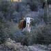 Flora - Arizona - Pinal County