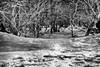 Manteau neigeux - Mont Ventoux (delphine imbert) Tags: vaulcuse mont ventoux noir blanc black white paysage neige froid hiver bois arbre nature