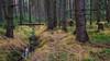 der Gefallene - the fallen (ralfkai41) Tags: landscape herbst woods wasser outdoor wald natur bäume trees creek landsvchaft gras woodlands water forest nature bach