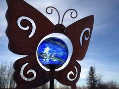 Butterfly Blue (Mr. Happy Face - Peace :)) Tags: blue gardening solar sky sun art2018 albertabound art butterfly glow metallic