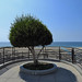 Los Angeles - Shadow Tree