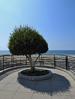 Los Angeles - Shadow Tree (Drriss & Marrionn) Tags: willrogersstatebeach sky bluesky beach baywatch tree shadow feature losangelesca la california usa citytrip coast sea losangeles ocean water coastline blue