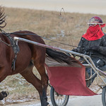 Harness racing workout at 8° F thumbnail