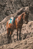 Mount Bromo - Fujifilm X-T2 (Fenchel & Janisch) Tags: fujifilmxt2 fujixt2 indonesia asia fujifilm travelphotography java mountbromo bromosunrise
