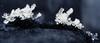 ... (a.penny) Tags: ice cristals eis kristall apenny fuji fujifilm finepix x10 macro explore