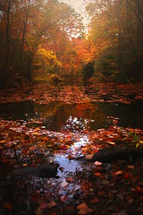 Autumn by the old pump house (Kapuschinsky) Tags: color fall autumn sonyalpha sonya900 minolta sonyphotographing water serene peaceful pennsylvania pennsylvaniaautumn nepa landscape nature red orange yellow colors colorful kapuschinsky trees forest woods vivid leaves reflection reflections
