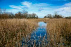 Titchwel Marsh (Keith Coldron) Tags: norfolk titchwell marsh nature reserve water reeds