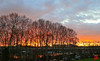 12 décembre ...8 h 34, le soleil au dessus de Paris (mamnic47 - Over 8 millions views.Thks!) Tags: leverdesoleil leverdujour saintcloud laseine platanes 6c8a4957