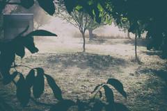 Brume d'un autre temps (Weblody) Tags: brume matin humide fumée caravane bohème 70