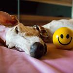 Dog sleeping on bed thumbnail