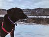 Cortana at Wisconsin Interstate State Park (Tony Webster) Tags: cortana interstatestatepark wisconsin dog winter dresser unitedstates us