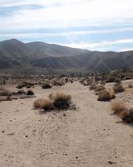 019 Following The Wash Downstream (saschmitz_earthlink_net) Tags: 2017 california orienteering redrockcanyon statepark laoc losangelesorienteeringclub mojavedesert desert kerncounty elpasorange