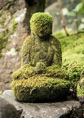 Mossy (campra) Tags: japan kyoto 京都 rengeji buddhist temple 蓮華寺 stone moss sculpture statue buddha green