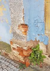 Broken bricks. Peeling paint. Wildflower decoration. (:Linda:) Tags: germany thuringia town eisfeld wall peelingpaint dandelion brick weed wildflower cobblestone
