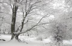 The Crystal Forest (Hector Prada) Tags: bosque nieve hielo árbol ramas cencellada invierno naturaleza forest snow ice frozen tree branch winter nature navarra