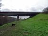 Dog in front of the A55 bridge, 2017 Dec 21 (Dunnock_D) Tags: uk unitedkingdom britain england green grass dog weimrador weimarador grey cloud cloudy sky field path riverbank a55 bridge roadbridge marchesway