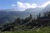 Greenery (sibymanuel2) Tags: olympus nature munnar kerala idukki india