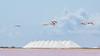 Take-Off to Bonaire! (karindebruin) Tags: blauw clouds canon lucht roze sky water wolken zout salt pink flamingos nederlandseantillen bonaire caribbean caribischgebied