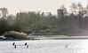 9Q6A6755 (2) (Alinbidford) Tags: alancurtis alinbidford brandonmarsh wildbirds cormorant