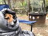 (daniel.hughley) Tags: bigsur camping carcamping carrot cheryl cran dogs norcal pfeifferbigsur redwoods