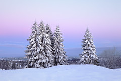 Wintery Scene - Vue-des-Alpes - Switzerland (Rogg4n) Tags: winter snow tree wintery quiet landsape switzerland suisse sigma1835mmf18dchsm neige season neuchâtel jura hill nature panorama sunrise pinetree fir sapin covered bw hiver paysage mist misty fog landscape winterscape minimalism canoneos80d franchesmontagnes wonderland vuedesalpes