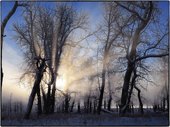 _1010007 (geelog) Tags: alberta bebogrove calgary fishcreekpark shannonterrace sikomelake ab canada newyearsday winter cold icefog sunrise