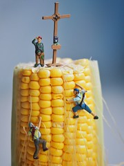 The north face (Mariasme) Tags: macro tiny vegetable corn challengeyouwinner
