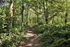 30357 (benbobjr) Tags: lincoln lincolnshire midlands eastmidlands england english uk unitedkingdom gb greatbritain britain british park skellingthorperoad b1378 path pathway footpath bridleway publicfootpath swanpool skewbridge foalclose