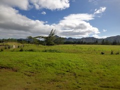 Wailua River State Park - Fern Grotto (59) (pensivelaw1) Tags: hawaii kauai wailuariverstatepark ferngrotto
